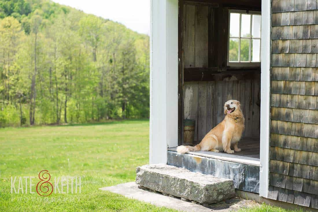 Dog friendly wedding venue New Hampshire Barn Wedding