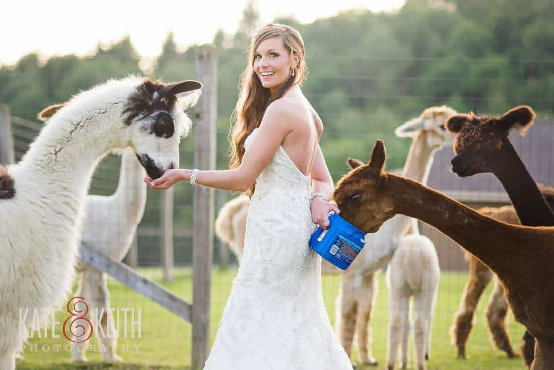 Bride Alpaca Farm Wedding NY