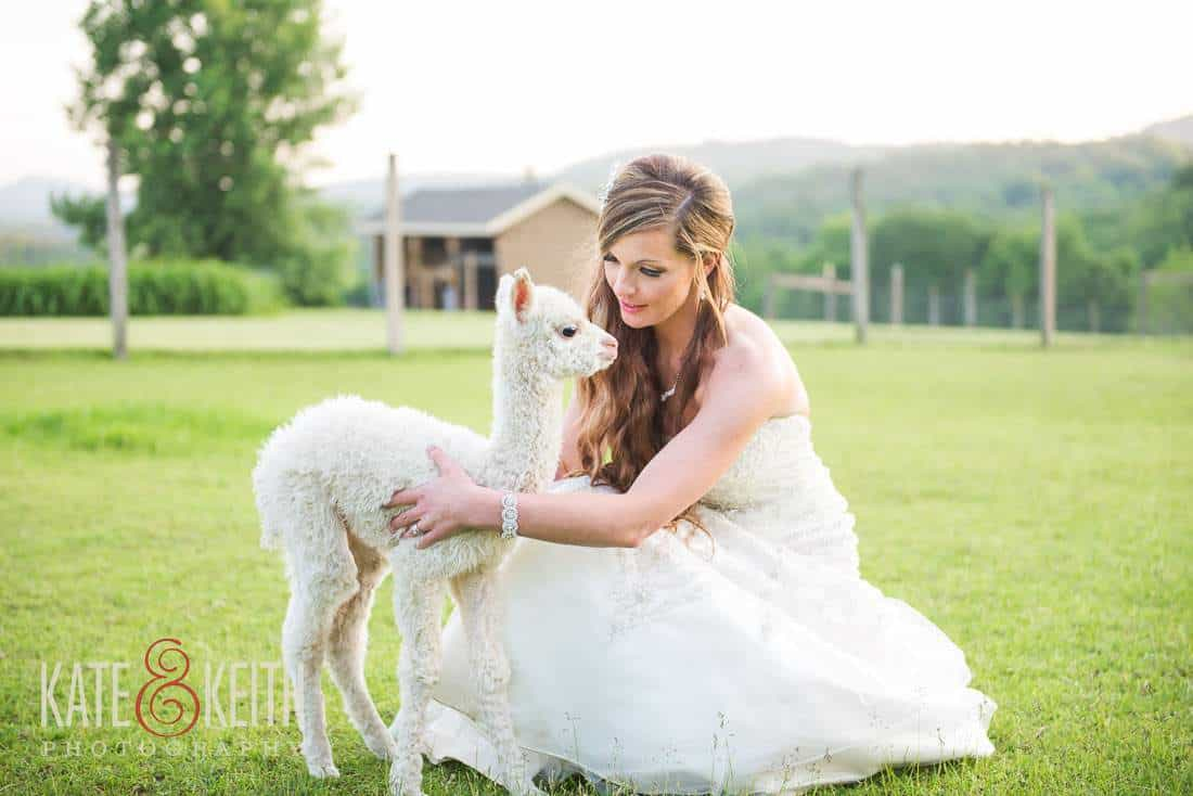 Bride Cria Alpaca Farm Wedding NY