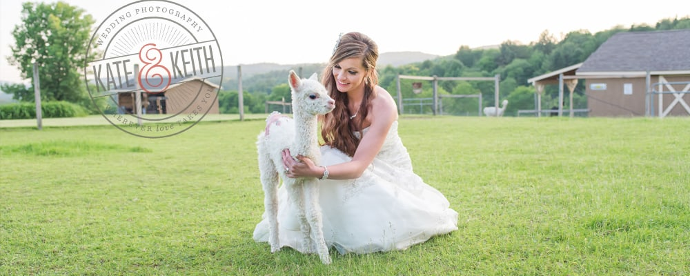 alpaca and bride at new england wedding