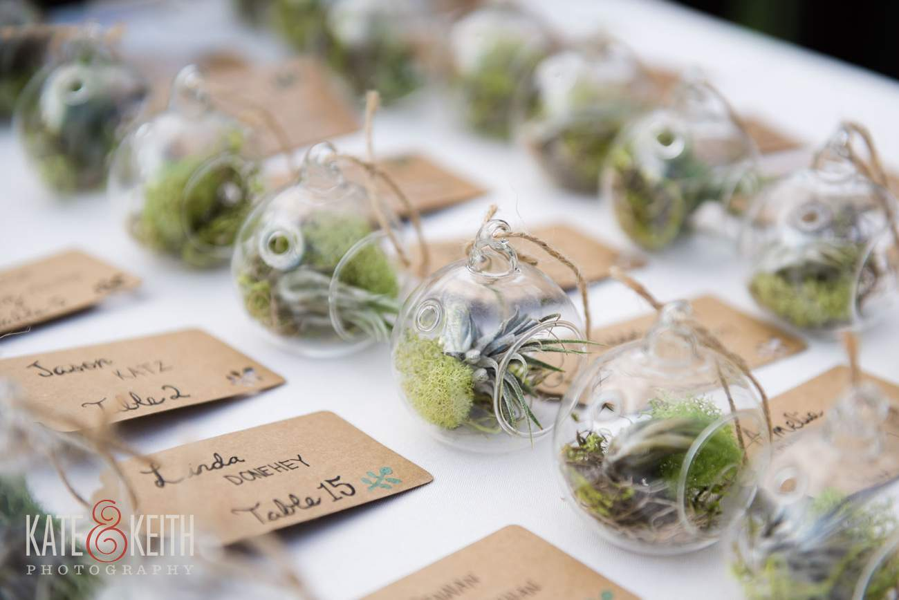 Air plant wedding favors ideas