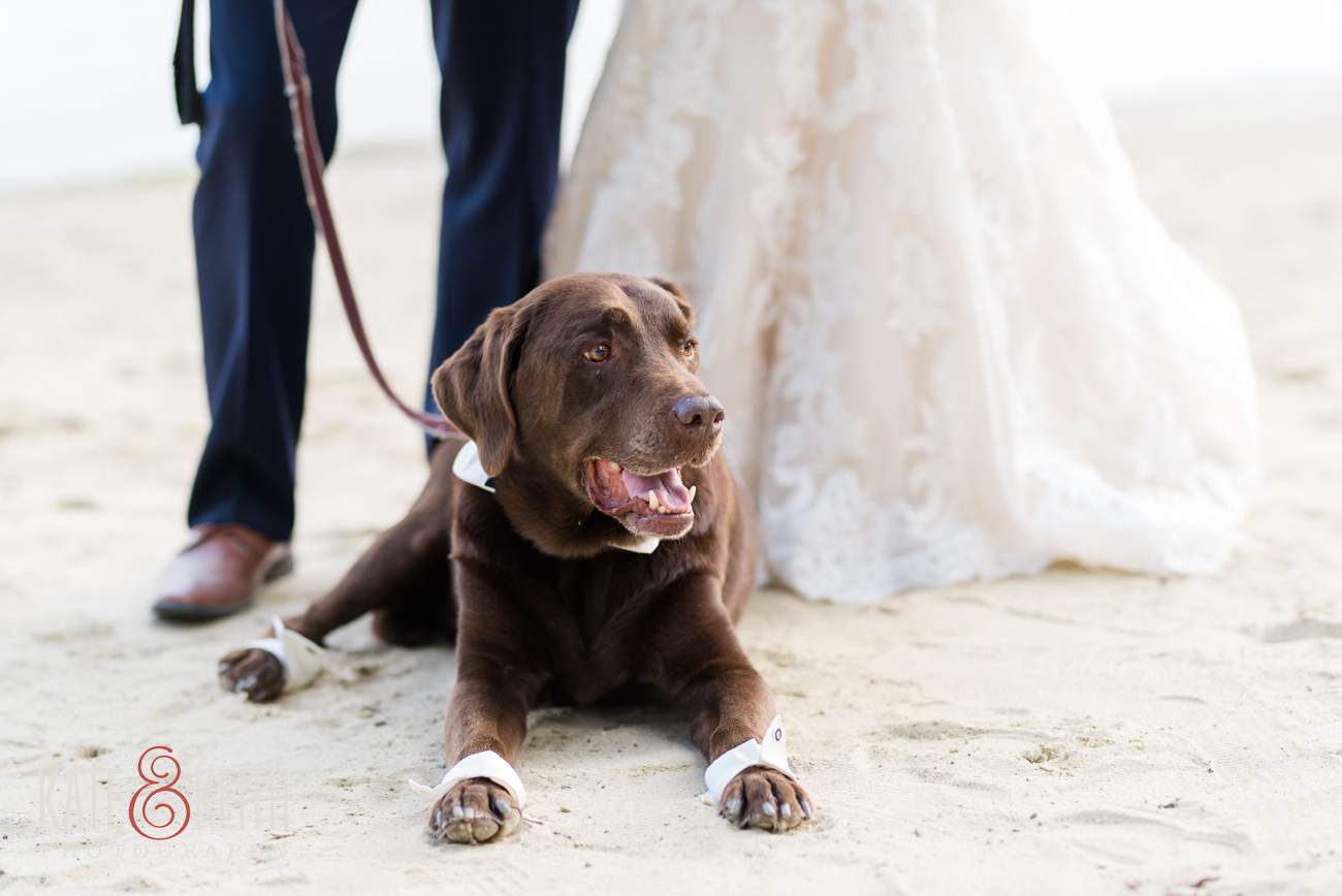 Happy wedding dog