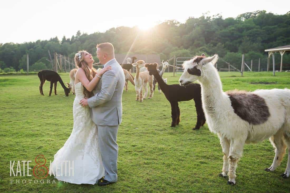 Alpaca Farm Wedding Ny 49 Jpg