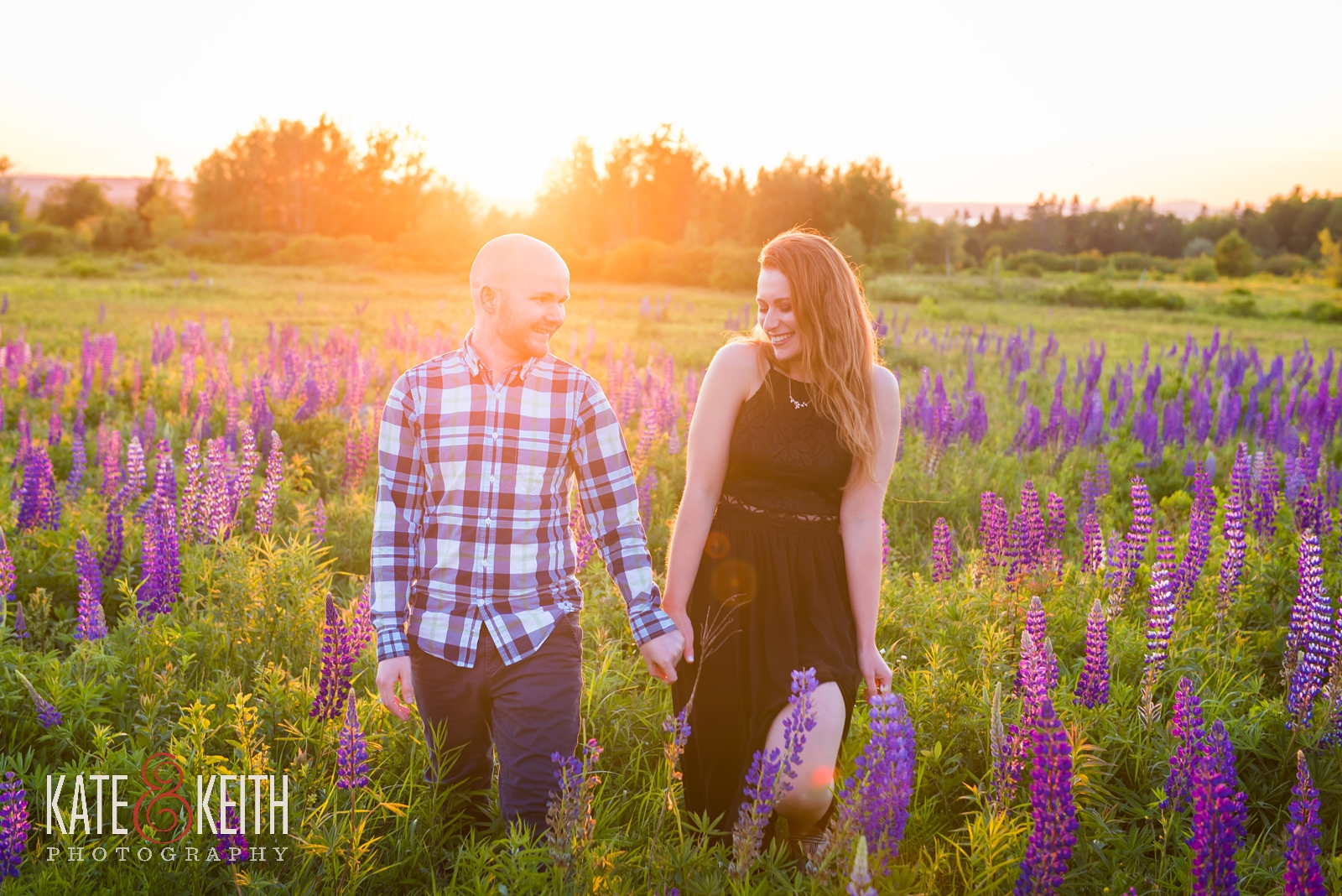 Acadia National Park, Maine, lupine, meadow, wildflowers, Mount Desert Island, MDI, marriage proposal, engagement, engaged, wedding proposal, sunset, summer, summertime, engagement photos